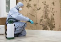 Black mold removal by professionals